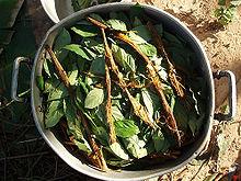 220px-Ayahuasca_and_chacruna_cocinando.jpg